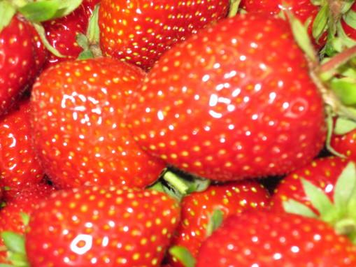 Erdbeeren frisch vom Feld!